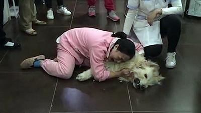 Vừa đưa chó cưng từ Mỹ về đã bị hàng xóm đánh bả chết, cô gái đau đớn khóc vật vã giữa đường