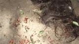 Xôn xao clip mẹ chồng đánh ghen giúp con dâu: Cắt tóc, xát ớt vào vùng kín nhân tình của con trai