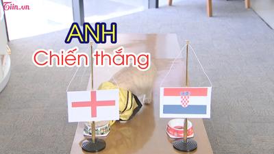 Trà My - Mèo Hoàng Thượng dự đoán trận đấu Anh và Croatia