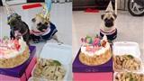Chàng trai mua bánh kem, thịt gà để tổ chức sinh nhật cho cún cưng