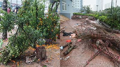 Đào, quất vứt la liệt giữa phố Hà Nội, người dân thi nhau đến lấy về chưng Tết không tốn tiền mua