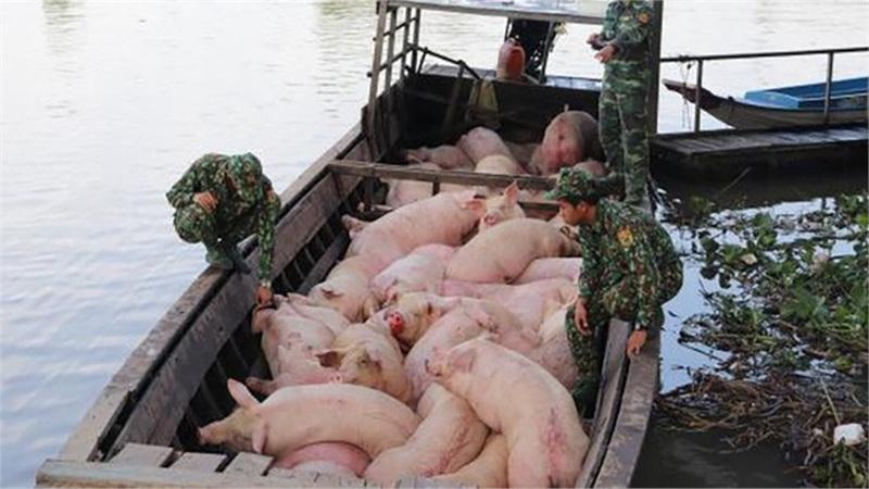 Dịch tả lợn châu Phi tái phát ở Quảng Ninh, Bộ NN&PTNT ra công văn 'khẩn'