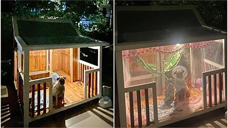 Chú chó sở hữu ngôi nhà gỗ xịn như vương tôn công tử, đêm còn được mắc màn chống muỗi khiến bao người ghen tị