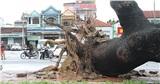 Sức gió khủng khiếp của Bão số 13 khi đổ bộ đảo Cồn Cỏ (Quảng Trị) và hậu quả để lại