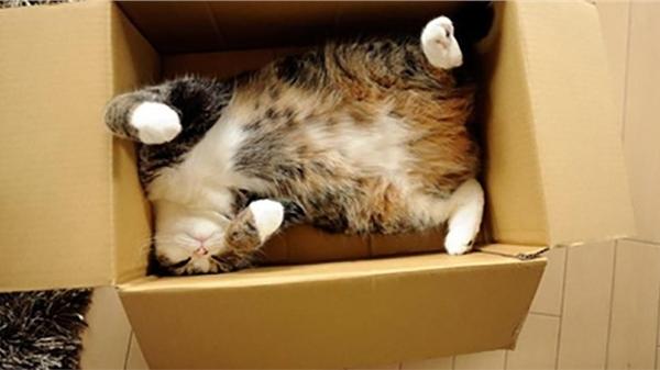 Tò mò chui vào thùng hàng, chú mèo bị 'ship' đi hơn 1.000 cây số và chuyến du lịch bất đắc dĩ khiến nhà chủ lo sốt vó cả tuần