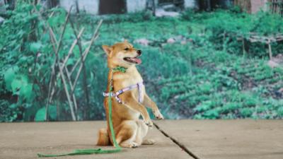 Phim điện ảnh Việt đầu tiên có diễn viên chính là nhân vật 'bốn chân' lộ diện!