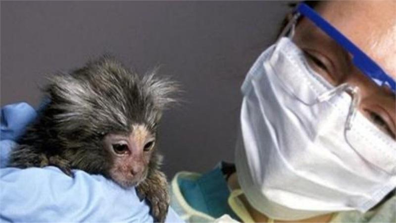Thiếu khỉ để thử nghiệm, vaccine ngừa COVID-19 có thể ra đời chậm hơn