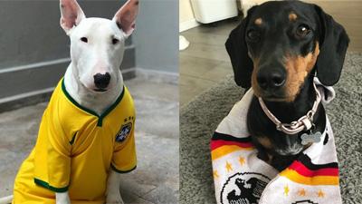 Cổ động viên cuồng nhiệt phiên bản thú cưng của World Cup 2018