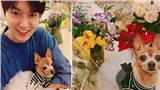 Sau khi xuất ngũ, Lee Min Ho đăng bức ảnh khiến vạn người phải ghen tỵ với nhân vật này