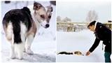 Bị bỏ rơi, chú chó nhỏ vẫn kiên nhẫn chờ chủ suốt nửa năm trong thời tiết âm 30 độ