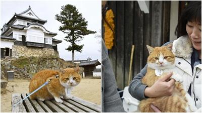 Chú mèo 3 tuổi bị lũ cuốn trở thành chúa tể của tòa lâu đài cổ ở Nhật Bản
