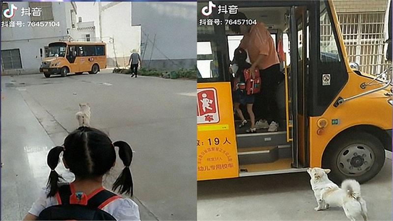 Clip: Cảm động chú chó hằng ngày đưa cô chủ nhỏ đi học
