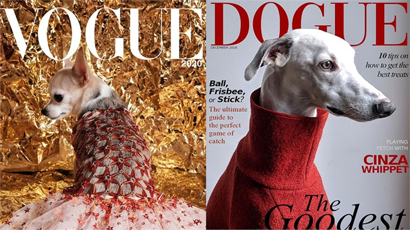 Trend mới của hội yêu động vật: 'Boss' lên bìa tạp chí sang chảnh và đẳng cấp