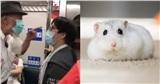 Chiếm chỗ ưu tiên của người cao tuổi cho chuột cưng, cô gái nhận chỉ trích dữ dội
