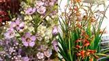 Chợ hoa Tết: Thanh liễu vừa hot đã bị soán ngôi, hoa vương của mùa Tết là lay-ơn lúa