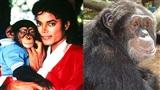 Chú khỉ cưng của Michael Jackson: Trẻ sống xa hoa như sao hạng A, về già cô độc chẳng ai đoái hoài