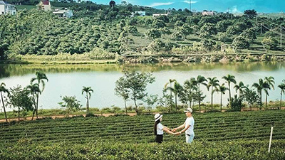 Lộ diện 'ốc đảo' chè lung linh như phim Hàn ở gần Đà Lạt, chỉ cần bấm máy là có ảnh đẹp