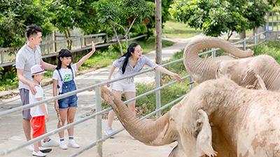 Đến Nghệ An, mục sở thị 2.000 động vật hoang dã quý hiếm ờ vườn thú lớn nhất Bắc Trung bộ