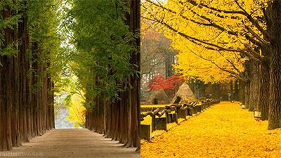 Thiên nhiên Hàn Quốc qua góc ảnh của du khách Việt: Đẹp ná thở, chỉ ước có tiền là bay liền sang đó