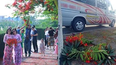 Nhóm du khách thản nhiên ngắt hoa, bẻ cành trên tuyến đường hoa phượng tại Hải Phòng