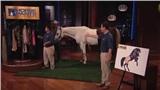 Diễn viên hài tới Shark Tank gọi vốn cho dự án 'quần cho ngựa' và cái kết khiến ai nấy đều 'cười bò'