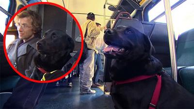 Thích thú với 'cô chó' tự lập, chủ động bắt xe buýt đi dạo công viên mỗi ngày