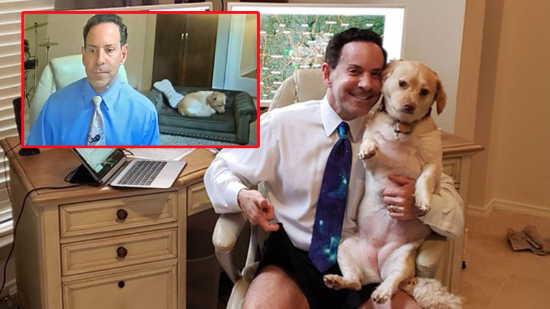 Chú chó bất ngờ nổi tiếng khi nằm ngủ trên sofa lúc chủ nhân dẫn bản tin thời tiết trên truyền hình