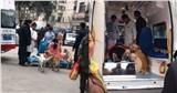 Khoảnh khắc dàn boss chen nhau tranh chỗ lên xe cứu thương để đưa 'sen' đi sinh khiến dân mạng thích thú