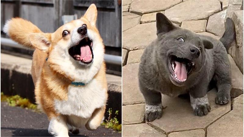 Chú chó Nhật Bản gây 'sốt' vì biểu cảm 'cà khịa', tưng tửng chẳng kém gì idol Nguyễn Văn Dúi