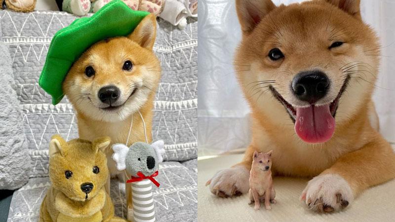 Chú chó sở hữu biểu cảm 'tấu hài', thấy đồ ăn là cười toe toét