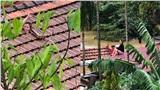 Quảng Bình: Người phụ nữ dỡ ngói kêu cứu giữa nước lũ lớn, trên tay bế bé sơ sinh đã được đưa đến nơi an toàn