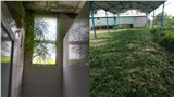 Vắng học sinh, thiên nhiên 'làm loạn': Trường học ngập ngụa cỏ cây sau gần 2 tháng nghỉ dịch