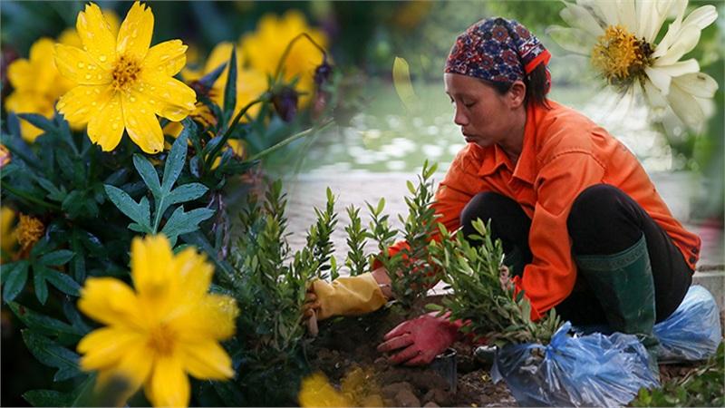 Vườn hoa hồ Hoàn Kiếm được 'thay áo mới' đẹp ngỡ ngàng trong tiết thu