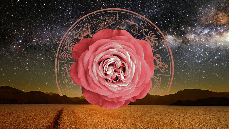 Tháng 10 của 12 cung hoàng đạo, bạn đã sẵn sàng cho một mùa thu lãng mạn nhưng cũng 'cầu kỳ' không kém?