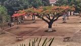 Hình ảnh cây phượng bị niêm phong giữa sân trường gây tranh cãi
