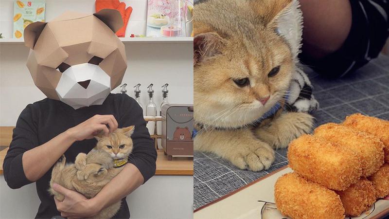 YouTube giấu mặt, chỉ lộ tay vẫn thu hút triệu subscribe vì tài nấu ăn ngon, yêu động vật