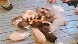 Chuyện lạ đời: Chó, mèo, chuột, thỏ thân thiết như anh em một nhà