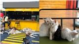 Quán cà phê chó mèo bị 'bóc phốt': Đồ uống, thái độ nhân viên không tốt, tệ nhất là tình trạng 'ngược đãi' động vật gây phẫn nộ