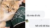 Đăng tin tìm mèo lạc, cô gái nhận ngay bình luận 'vô duyên hết sức': 'Lẩu mèo đi'