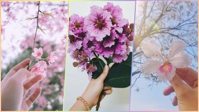 Hà Nội và những mùa hoa gợi nhớ, gợi thương