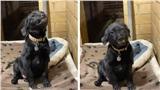Chú chó bị bỏ rơi luôn nở nụ cười toe toét với hi vọng có người đến nhận nuôi khiến cộng đồng mạng 'tan chảy'