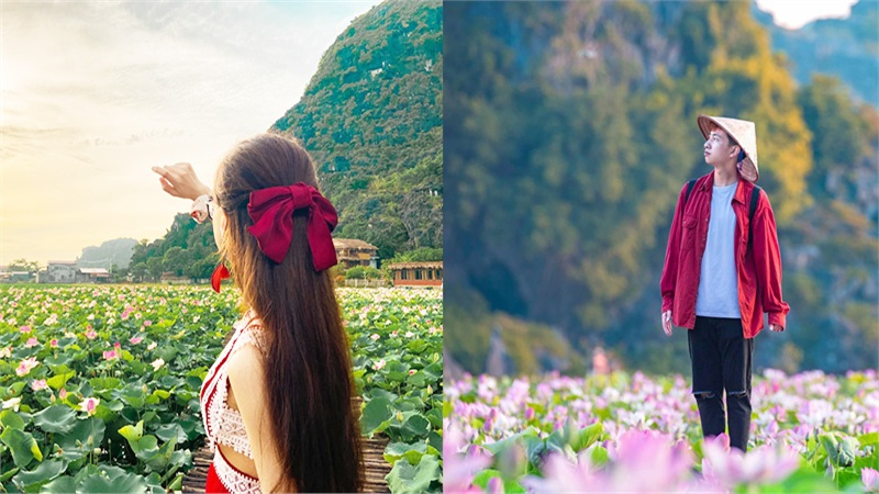 Sen miền Bắc đã tàn, hồ sen Ninh Bình vẫn nở rộ rực rỡ hút khách du lịch