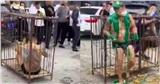 Chú rể bị nhốt trong lồng sắt, ném trứng, tạt sơn trong đám cưới ở Trung Quốc