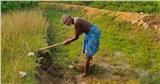 Quyết tâm đi đào kênh dẫn nước về làng, cụ ông bị vợ và mọi người mỉa mai là 'gã điên', 30 năm sau phải quay lại cảm tạ ông