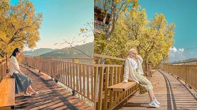 Xác định tọa độ 'con đường ngôn tình' đẹp mộng mơ, được ví như 'Little Korea' ở Đà Lạt
