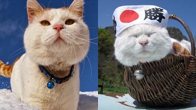 Chú mèo ham ngủ nổi tiếng Shironeko đã qua đời khiến nhiều người tiếc nuối