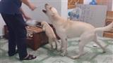 Đáng yêu như chú cún này: giằng co, ngăn chủ đánh bạn cùng nhà
