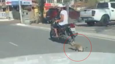 Nam thanh niên đi xe máy kéo lê chú chó chảy máu bê bết trên đường khiến ai cũng phẫn nộ