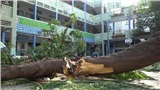 Bộ trưởng Phùng Xuân Nhạ gửi lời chia buồn đến gia đình học sinh bị cây đè tử vong