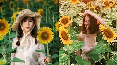 'Phát sốt' với cánh đồng hoa hướng dương đẹp như tranh vẽ ngay gần Hà Nội, giá vé chỉ 30.000 đồng